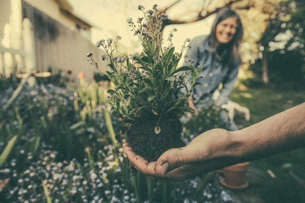 Hand holding a flower plant outside before putting it in the ground